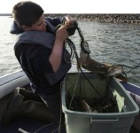 Nine-year-old Ben Sam (Mille Lacs) hauls in a 100-foot net filled with walleye, northern pike, and suckers on Mille Lacs Lake, 2004. | Photo by Sue Erickson, courtesy of the Great Lakes Indian Fish and Wildlife Commission