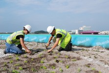 Workers plant grasses and flowers on the roof of the Dakotah! Sport and Fitness Ice Arena | Courtesy Shakopee Mdewakanton Sioux Community